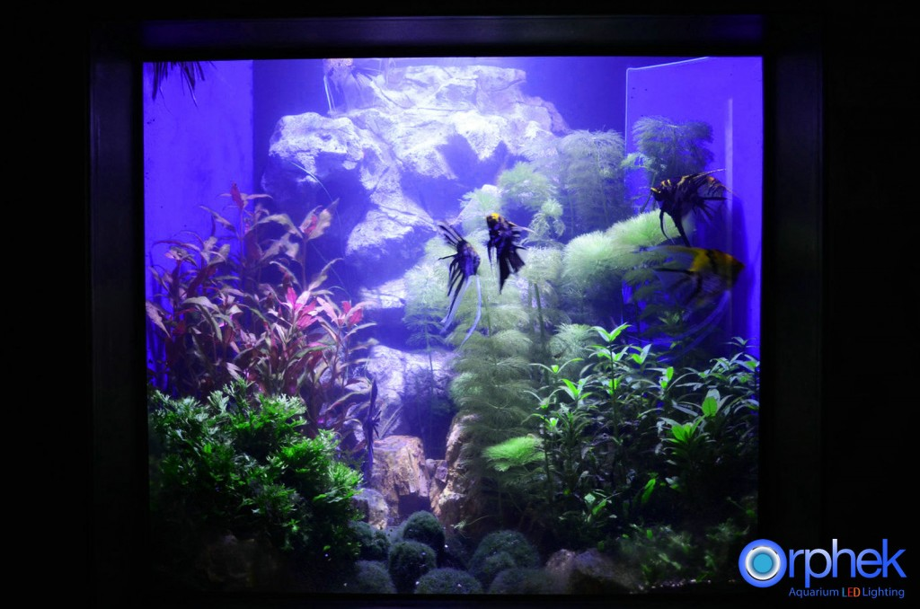 --planted-Aquarium LED-verlichting-amazon