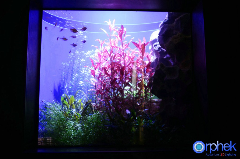 Chengdu-openbare-aquarium LED-verlichting-amazon -zone-19