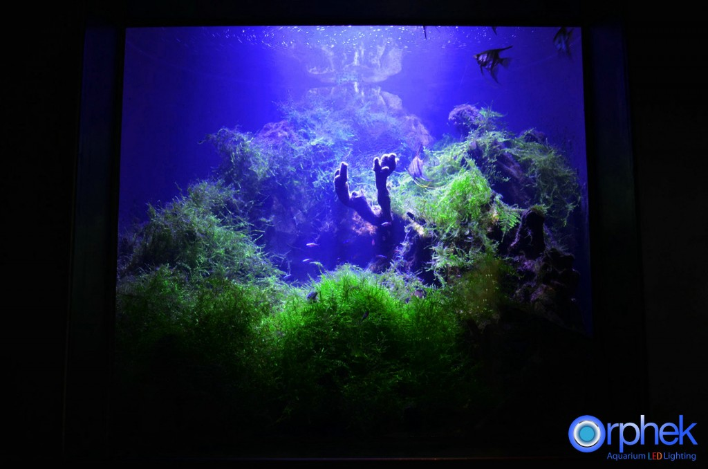 Chengdu-openbare-aquarium LED-verlichting-amazon -zone-20