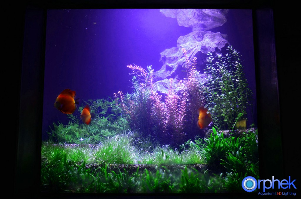 Chengdu-openbare-aquarium LED-verlichting-amazon -zone-21