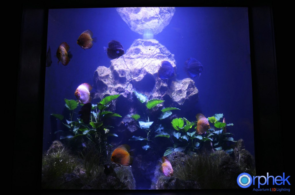 Chengdu-openbare-aquarium LED-verlichting-amazon -zone-22