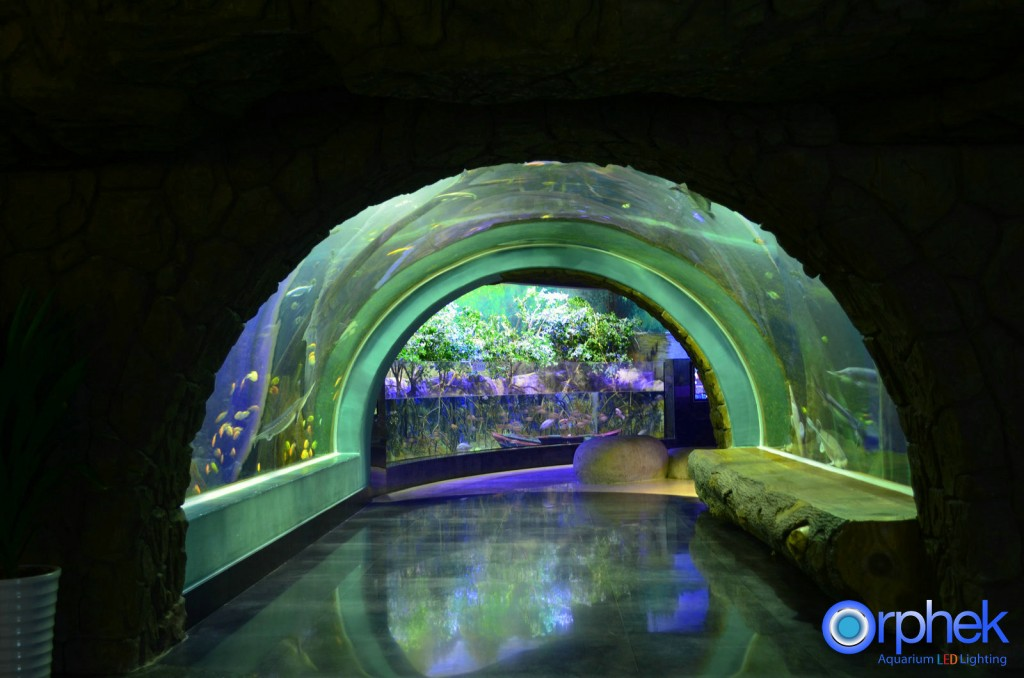 Chengdu offentlig-akvarium-LED-belysning-amazon -zone-5