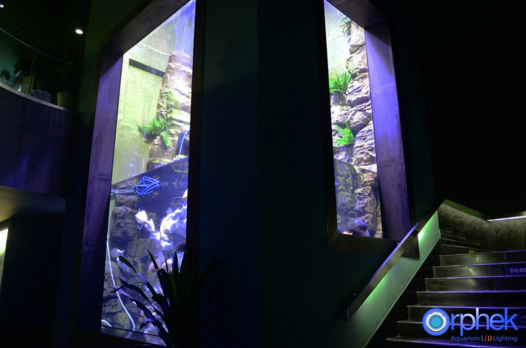 Chengdu-openbare-aquarium LED-verlichting-amazon -zone-9