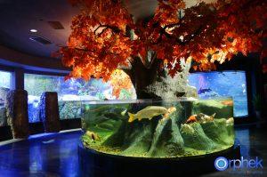 chengdu-public-aquarium-LED-lighting-china -zone-1