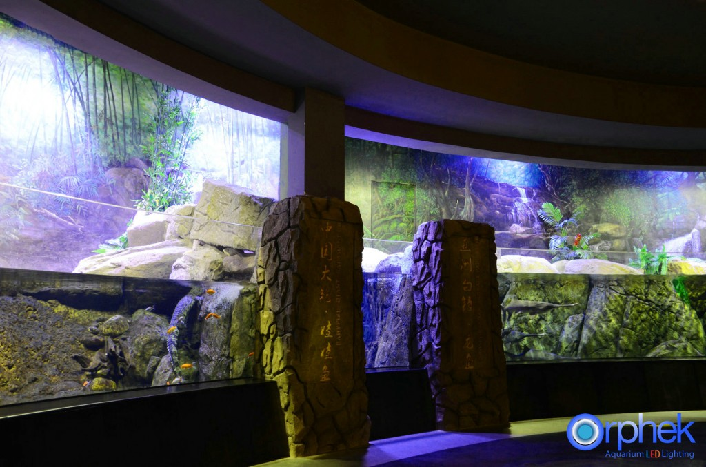 Chengdu-openbare-aquarium LED-verlichting-china -zone-13
