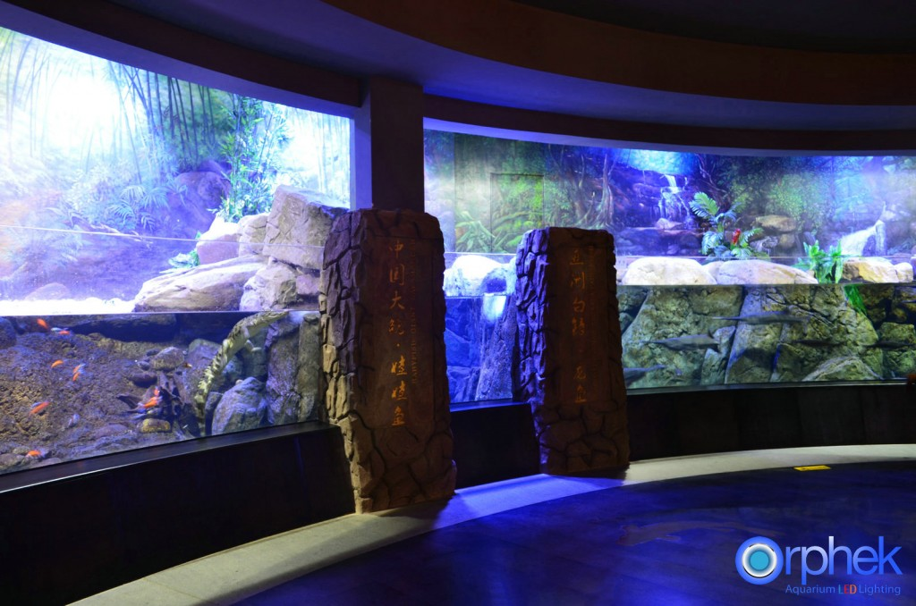Chengdu-openbare-aquarium LED-verlichting-china -zone-4