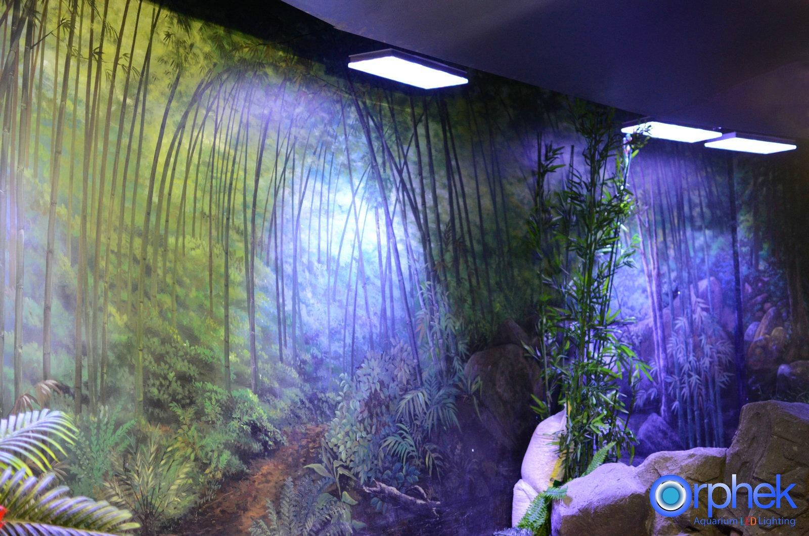 Il nuovo acquario pubblico di Chengdu ha il pannello frontale pi? ...