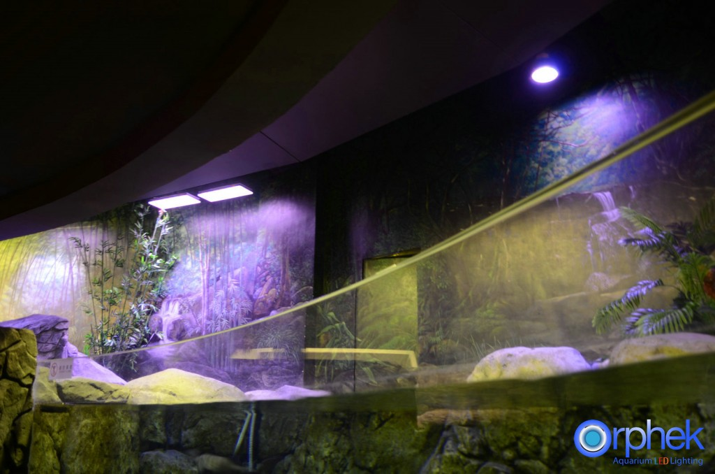 Chengdu-openbare-aquarium LED-verlichting-china -zone-9