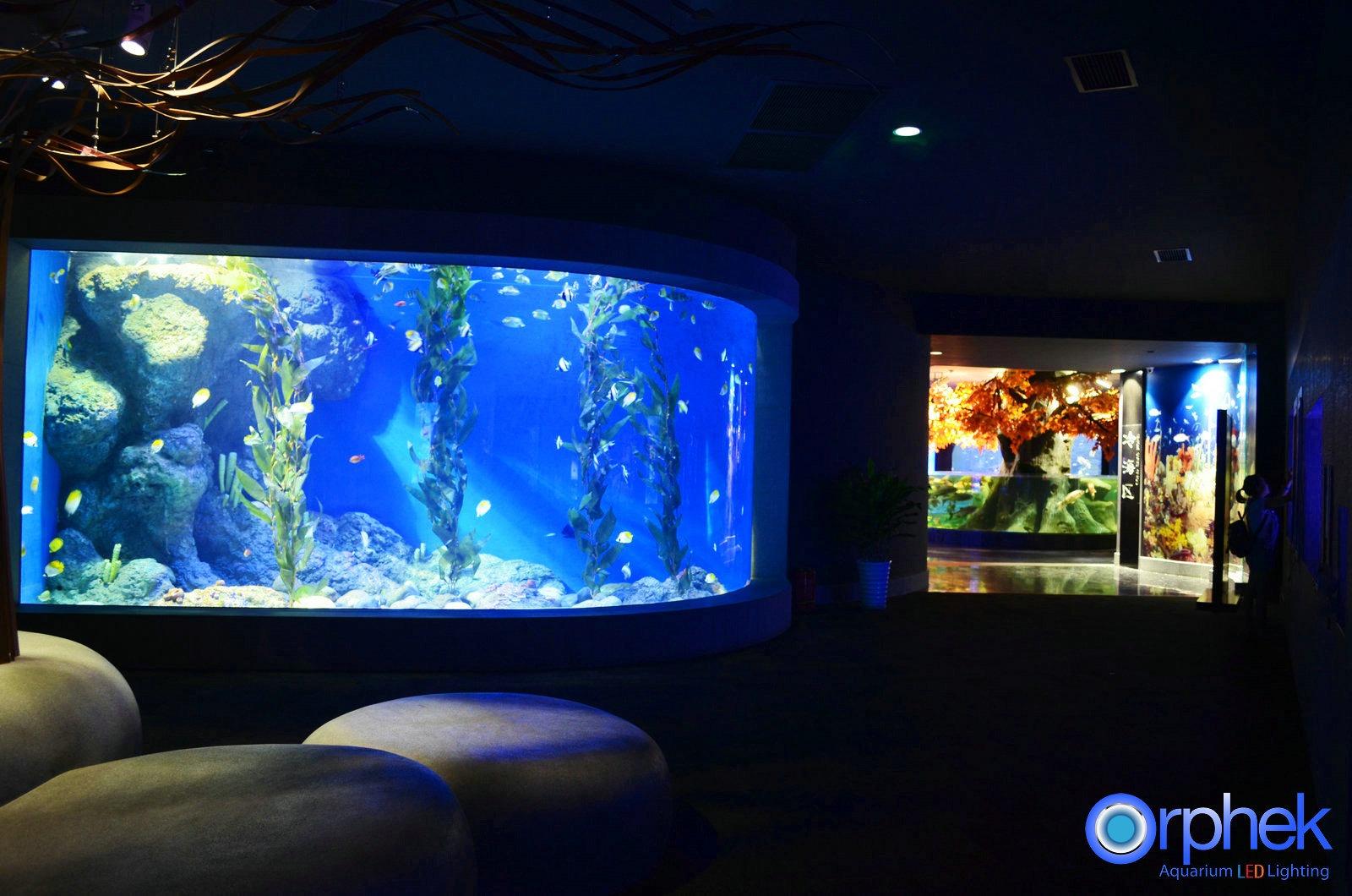 acuario público algas