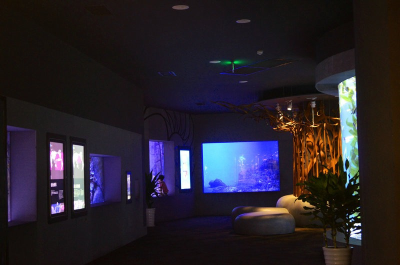 chengdu-public-aquarium-LED-lighting-cold -seas