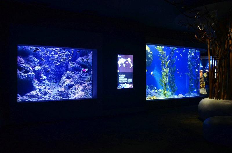 aquarium led verlichting foto 39 s best reef aquarium led. Black Bedroom Furniture Sets. Home Design Ideas