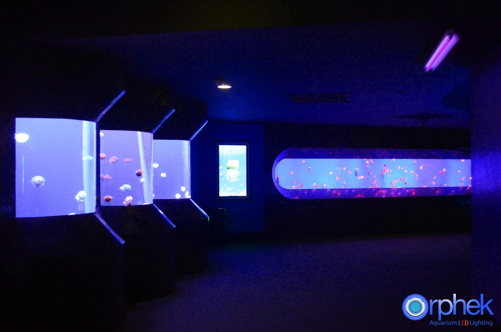 chengdu-public-aquarium-LED-lighting-jellyfish-zone-1