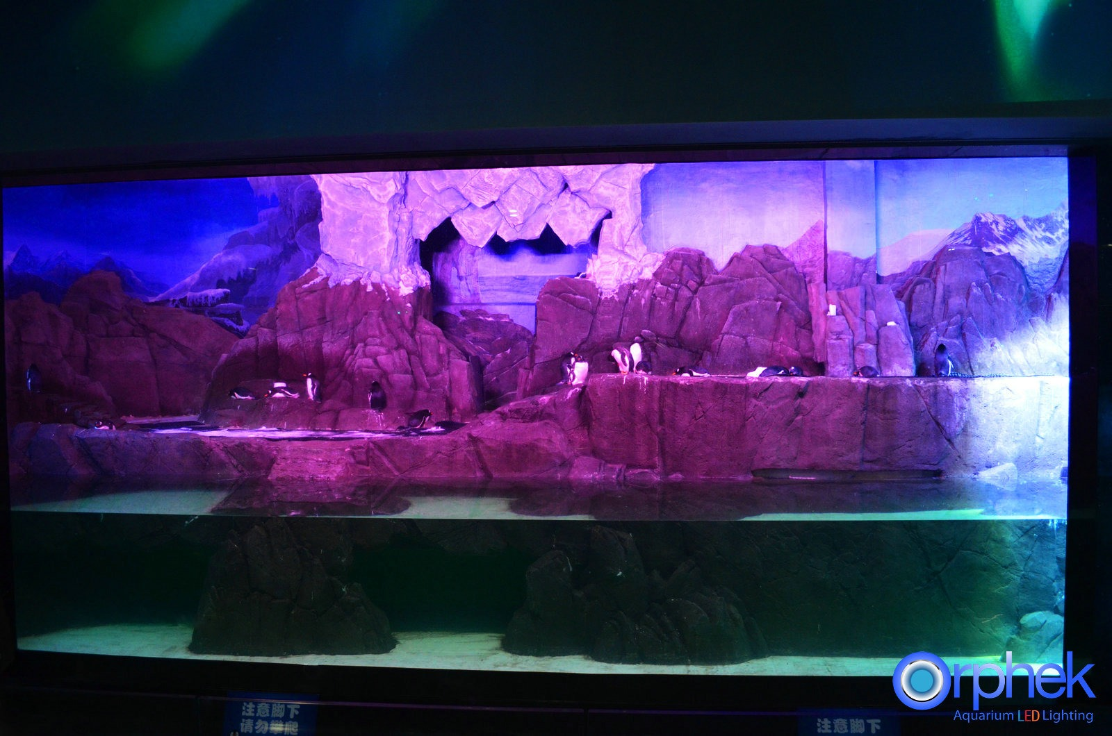 aquarium led beleuchtung fotos beste reef aquarium led. Black Bedroom Furniture Sets. Home Design Ideas