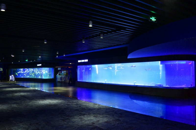 chengdu-public-aquarium-LED-lighting-special-exhibition-zone-1