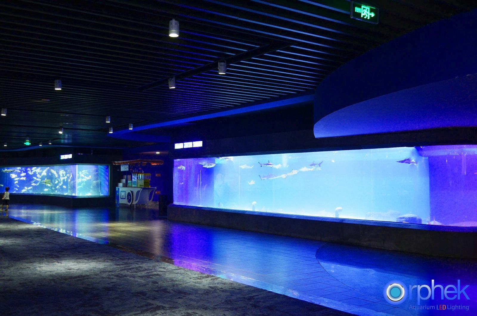 projet d 39 clairage led d 39 aquarium public de chengdu clairage led d 39 aquarium orphek. Black Bedroom Furniture Sets. Home Design Ideas