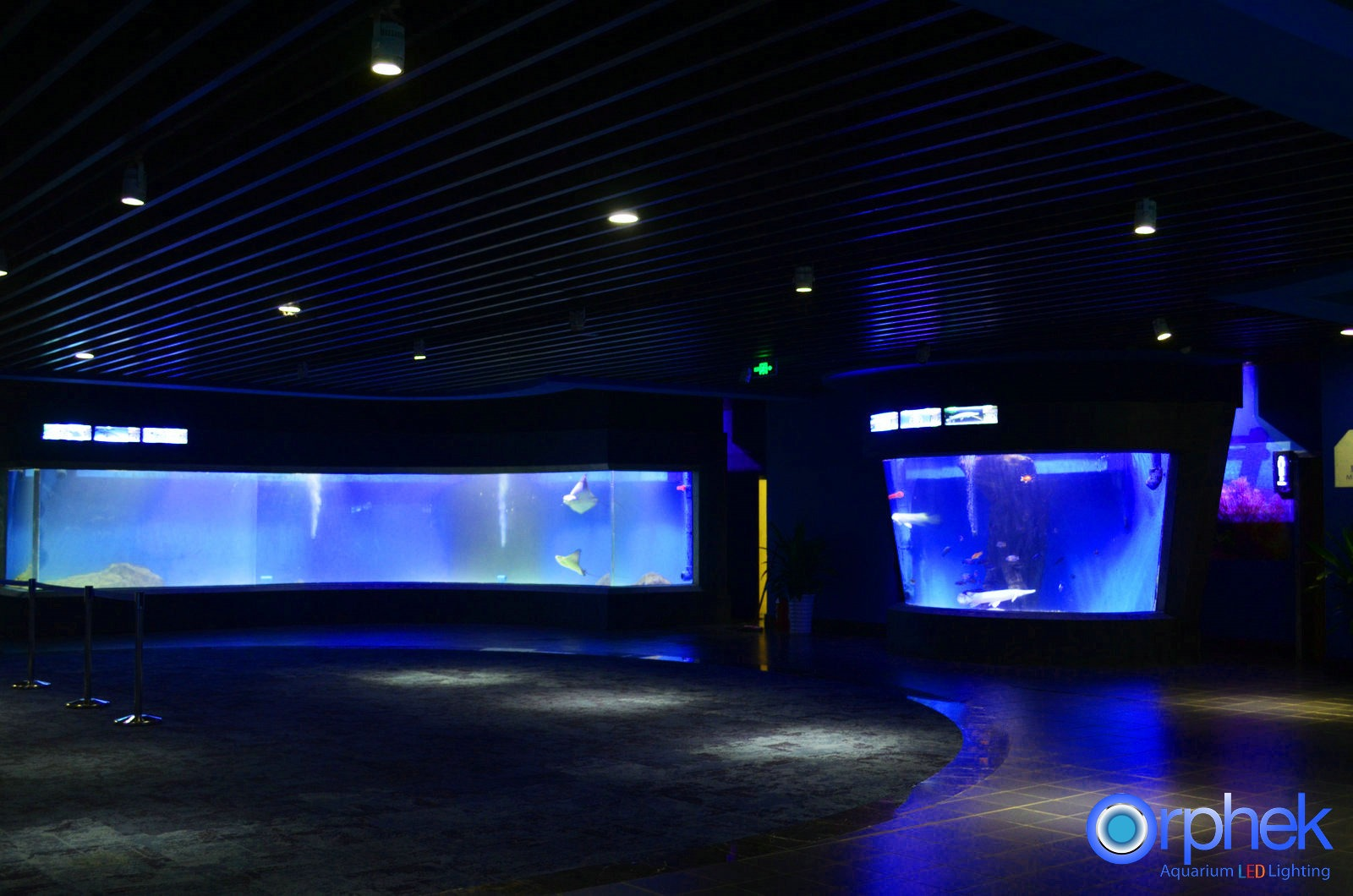 public-aquarium-éclairage LED-special-exposition