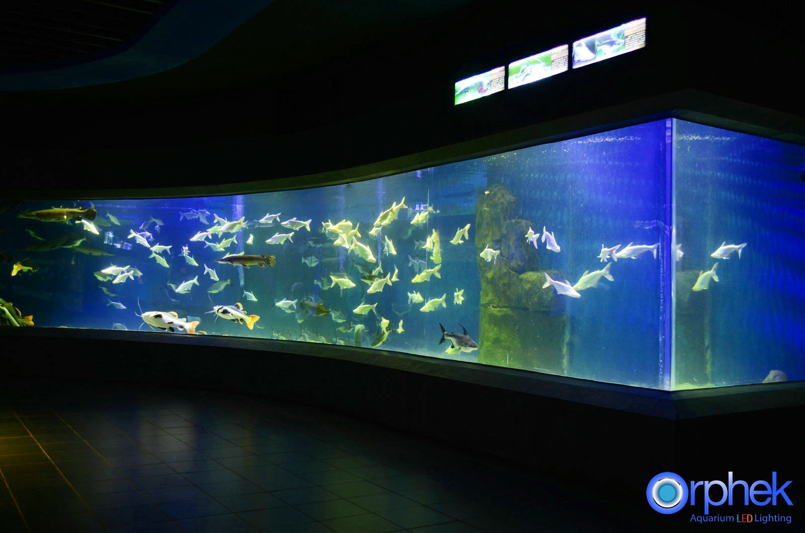 public aquarium LED lighting special exhibition zone
