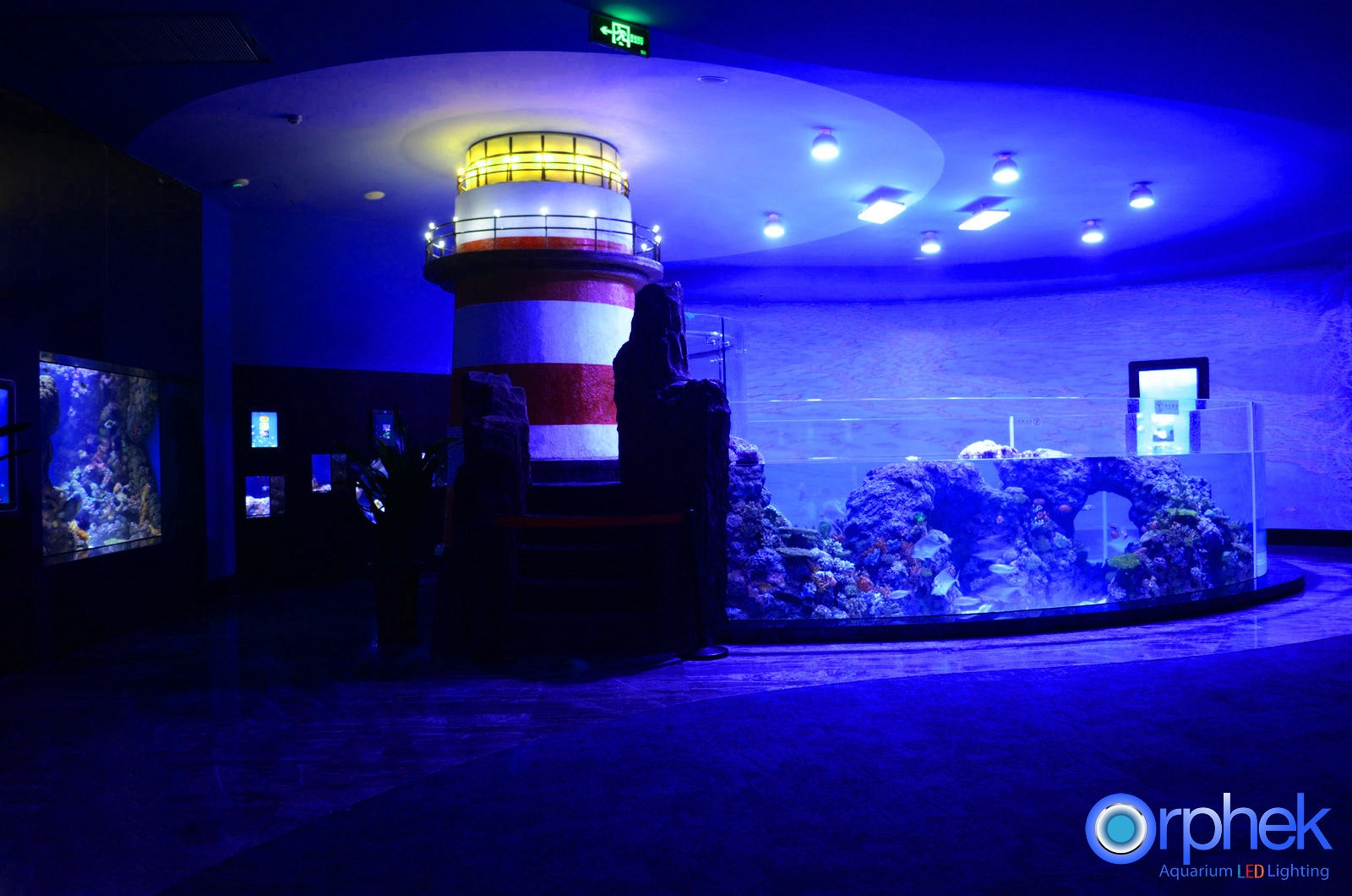 chengdu-public-aquarium-éclairage LED-tropical -sea-zone-15