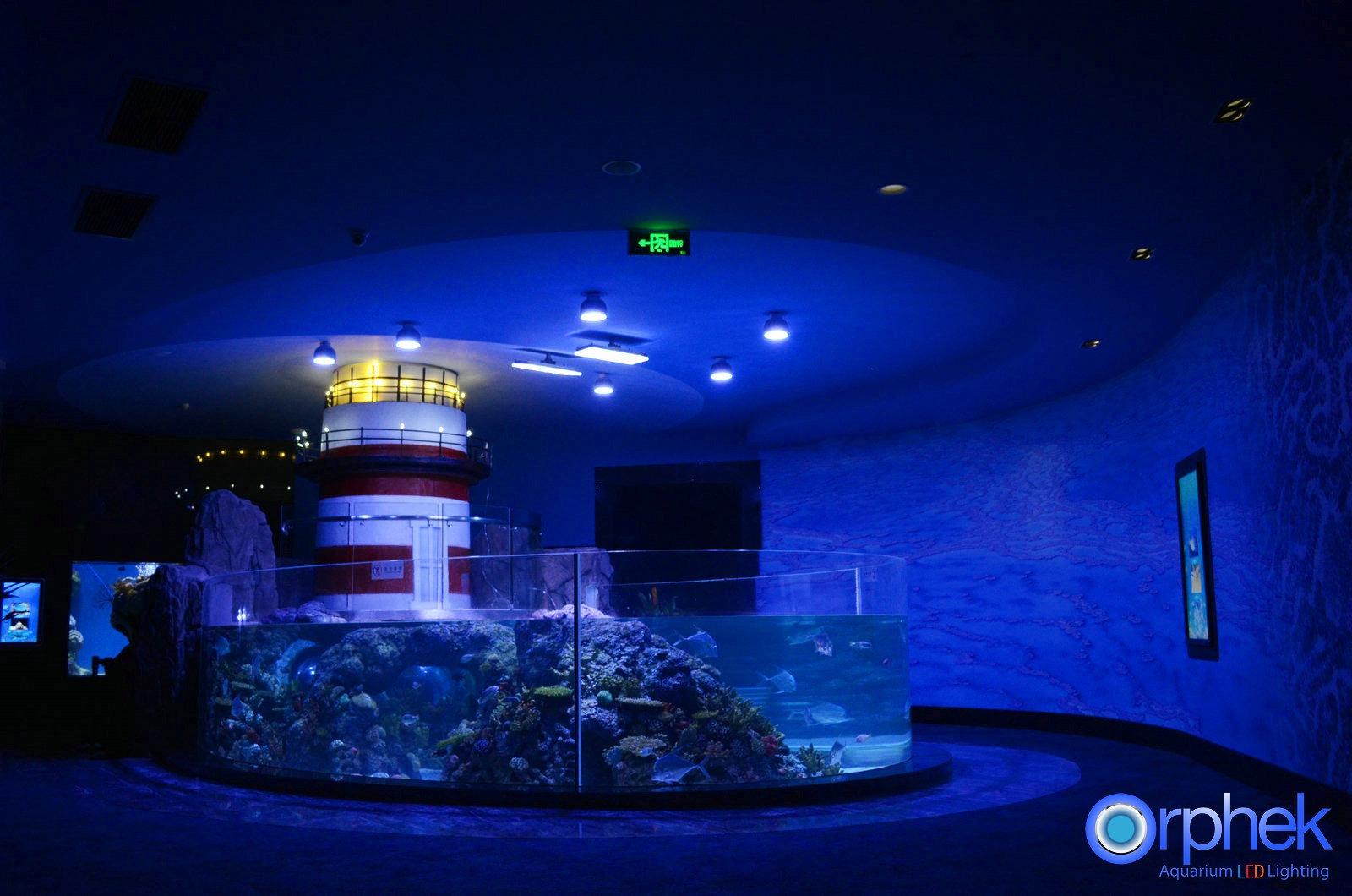 chengdu ffentliches aquarium led lichtprojekt aquarium led beleuchtung orphek. Black Bedroom Furniture Sets. Home Design Ideas