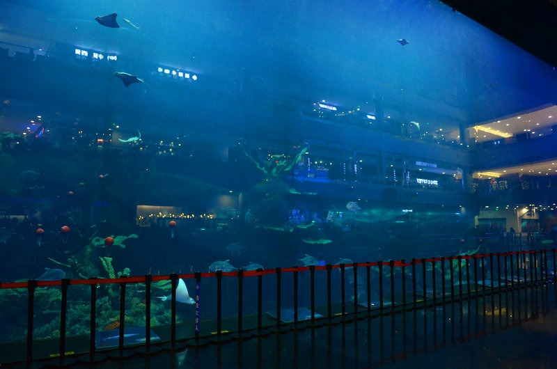 chengdu-public-aquarium-LED-lighting