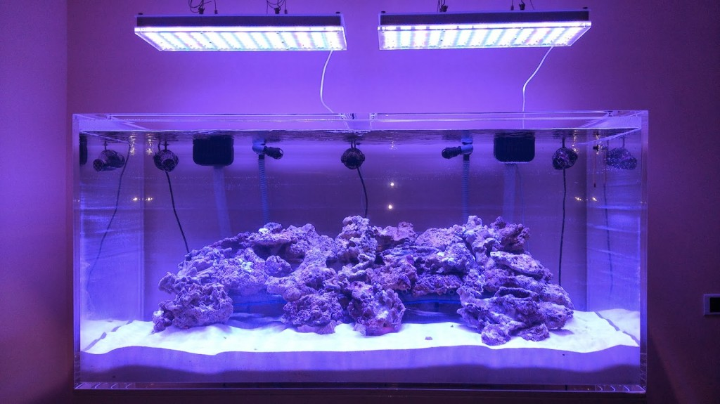 led-over-reef-tank