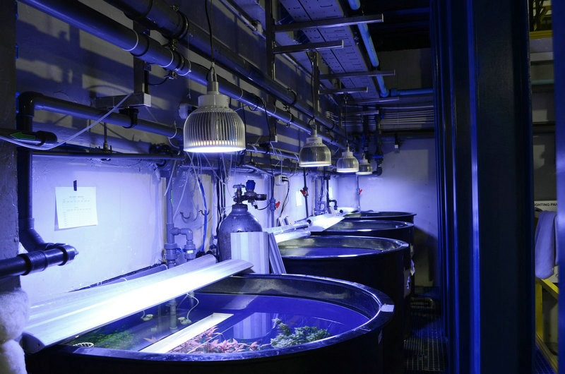 public-reef-aquarium-éclairage LED-orphek
