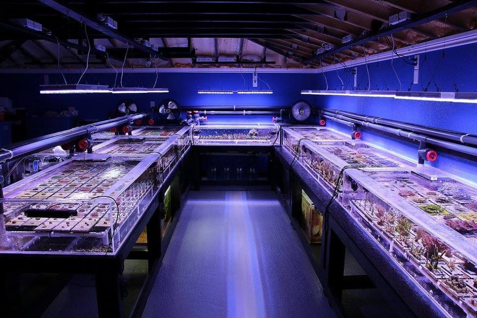 Metal halide lighting soon to be phased out orphek for Salt water fish store