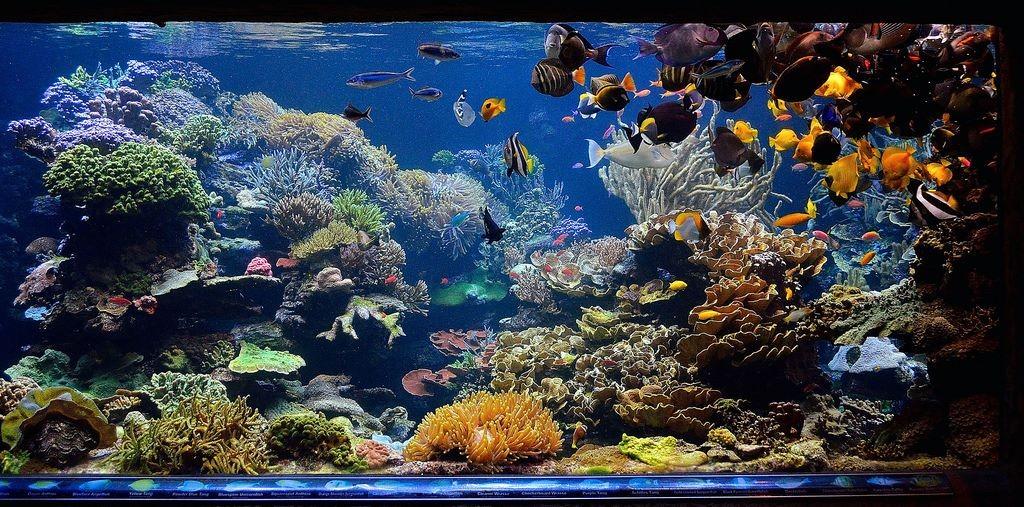 20000 gallons-aquarium