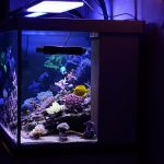 210-gallon-tank-under-atlantik-v2-1b-ledda