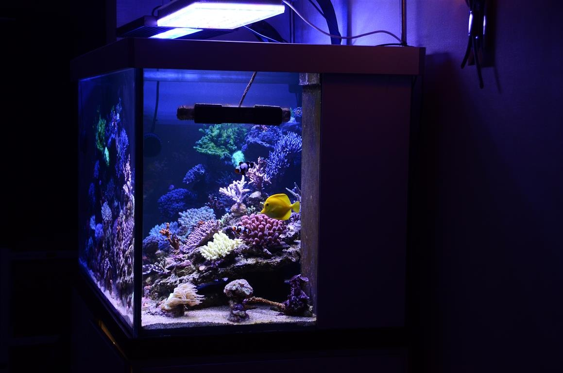 210-gallon tank-under-Atlantik-v2-1b-ledede