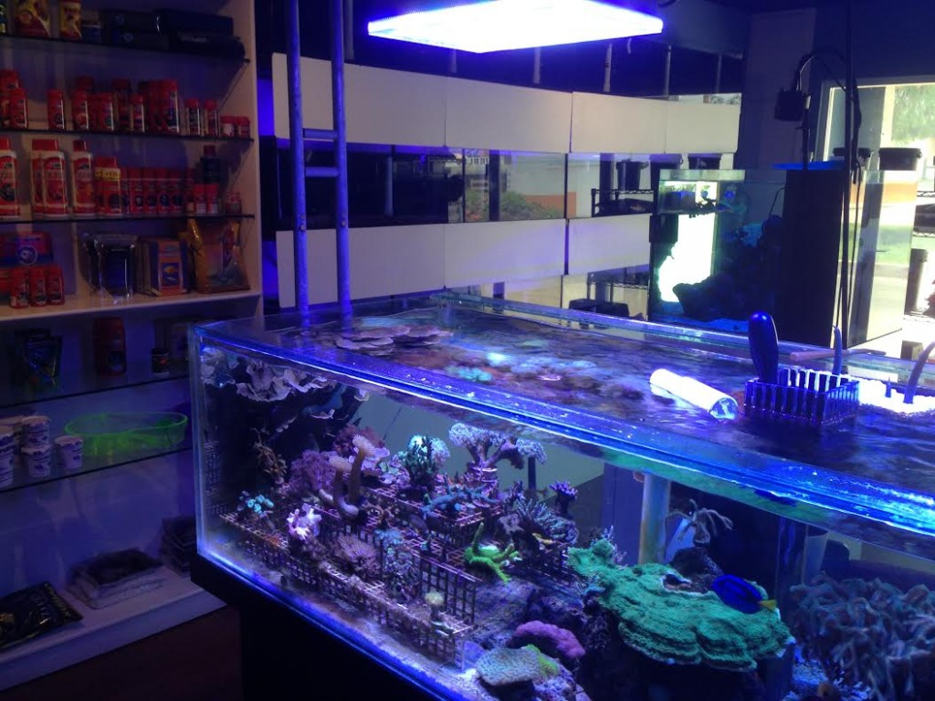 Big Fish Aquarium Бутік-Orphek-LED-освітлення