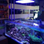 Big Fish Aquarium Boutique-Orphek-LED-belysning
