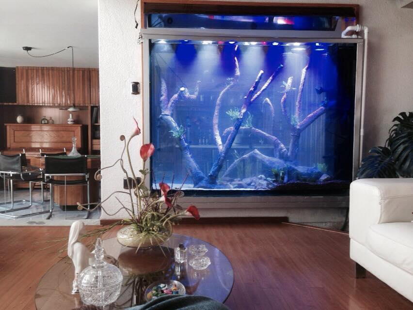 Big Fish Aquarium Boutique-έργο-2