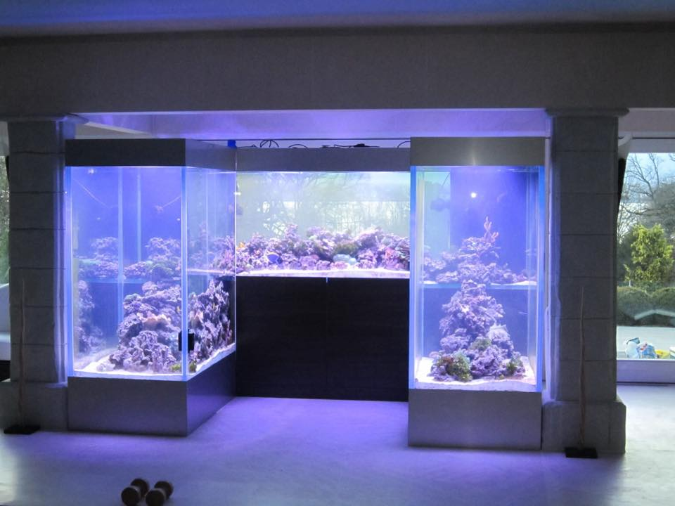 Big Fish Aquarium Boutique-projekt