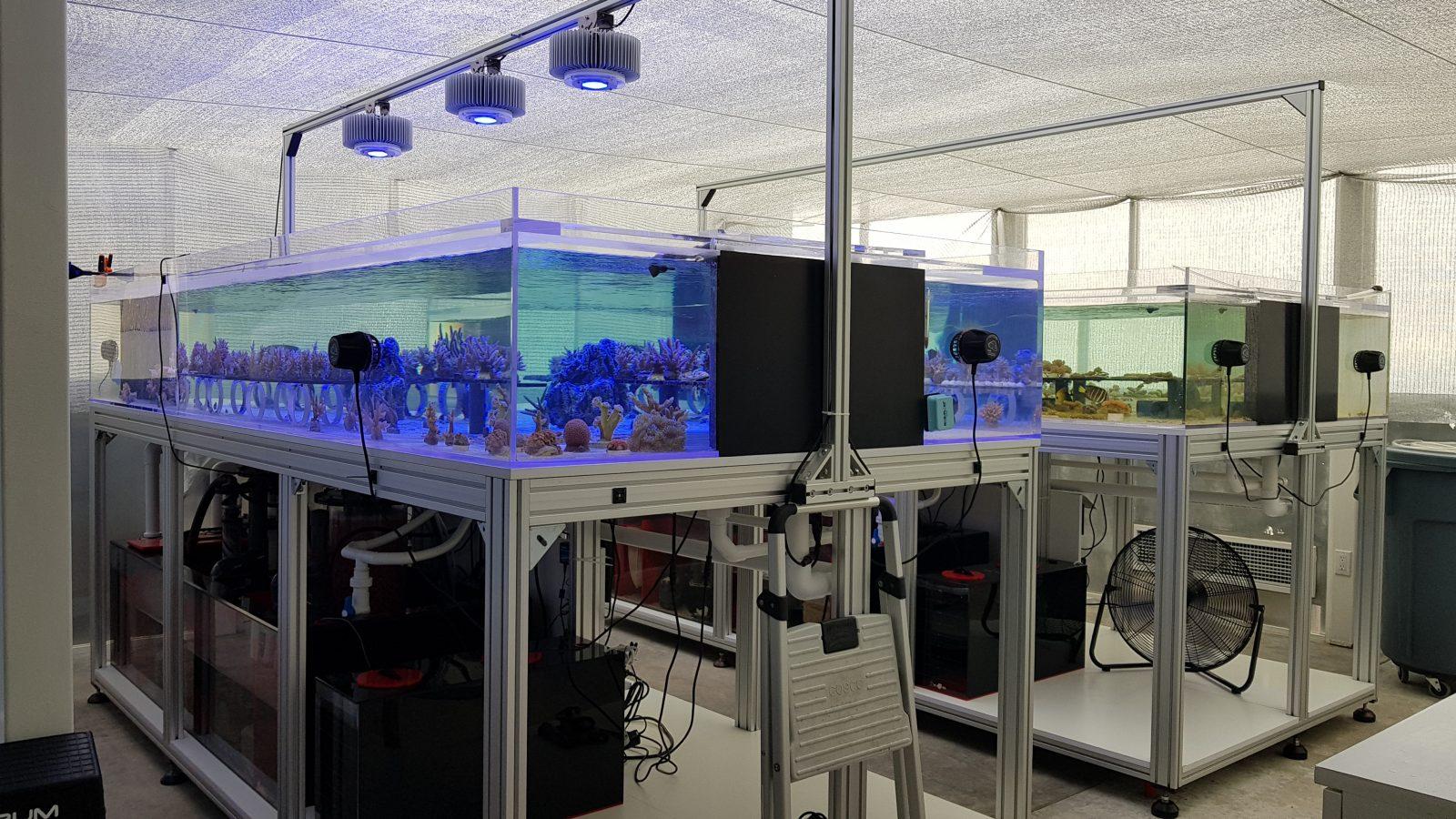 珊瑚农场Kaspian -120watt