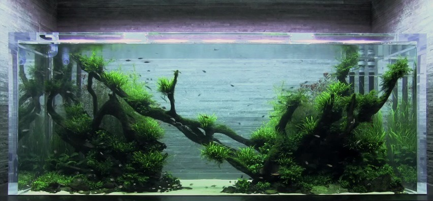 Akuarium Banyu Iyem-Takashi Amano-