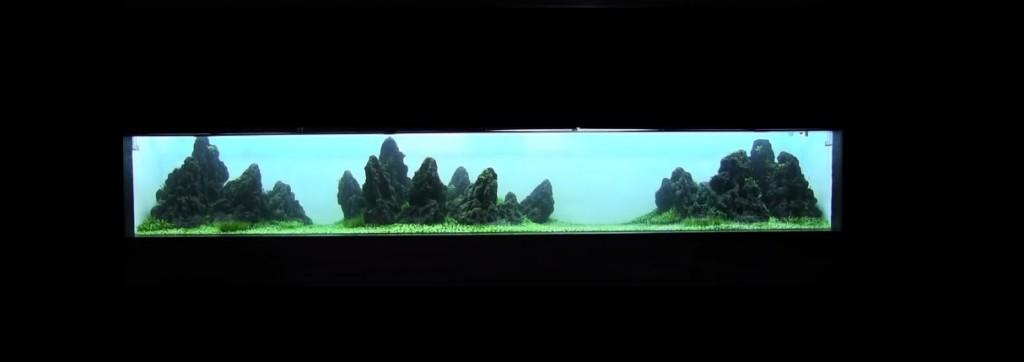 Takashi Amano- Dikilen Temiz su tankı