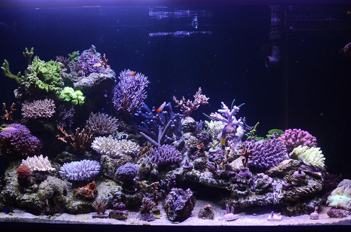 aquarium_orphek_Led