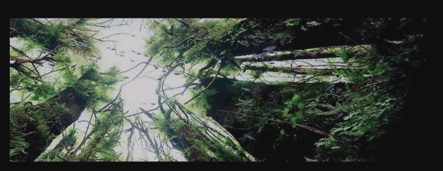 aquascaping_takashi_amano