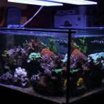 best-led-acquario-light-per-acqua salata-tank-in-france