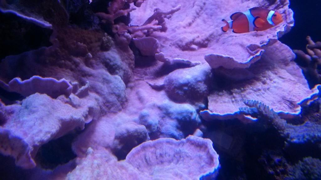 coral_Bacterial _Bleaching