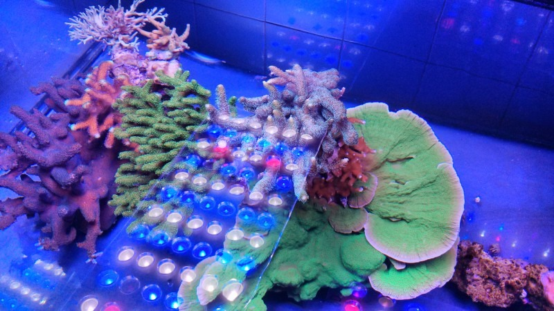 great coral growth and color