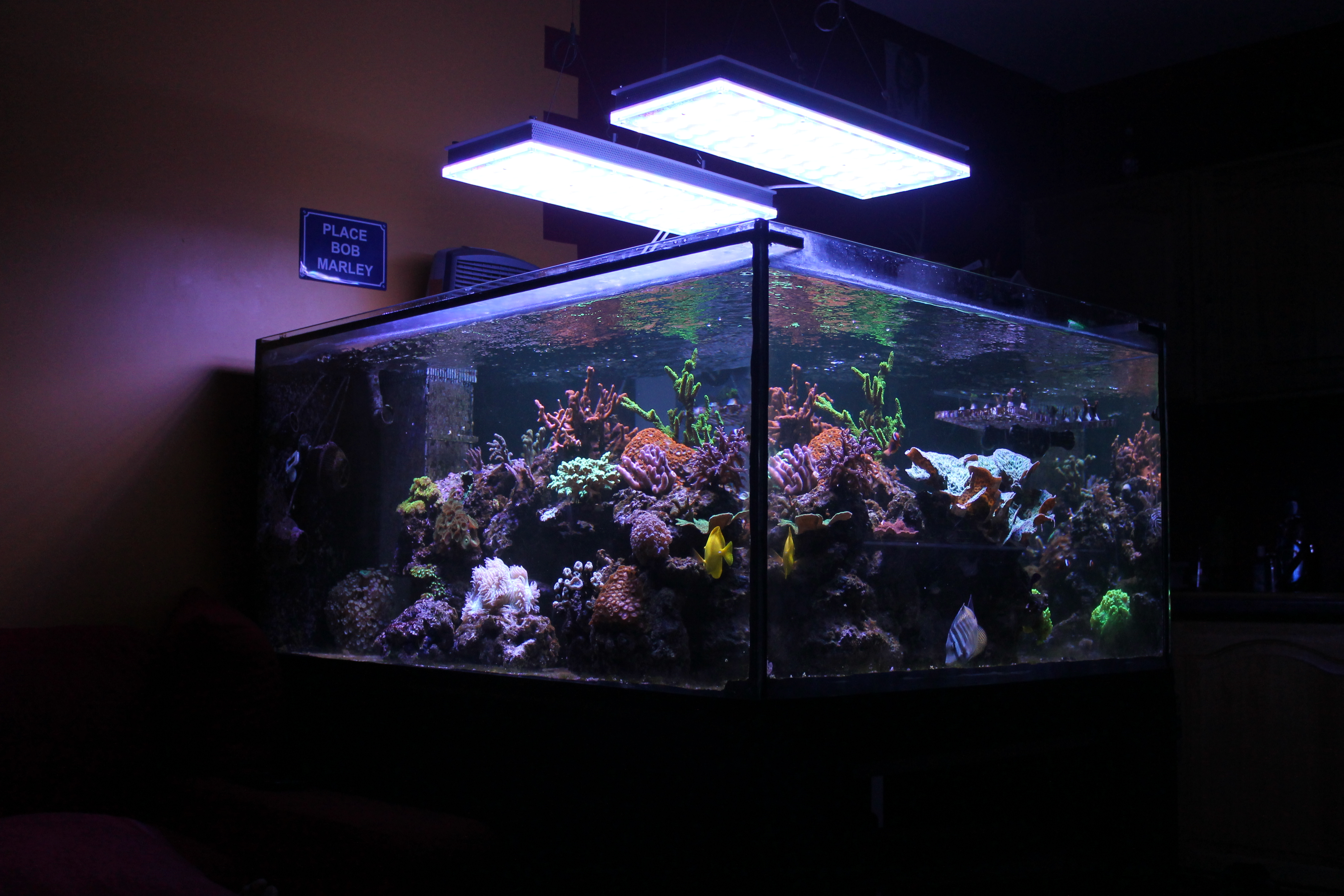 beste led aquariumlamp voor zoutwatertank frankrijk orphek aquarium led verlichting. Black Bedroom Furniture Sets. Home Design Ideas