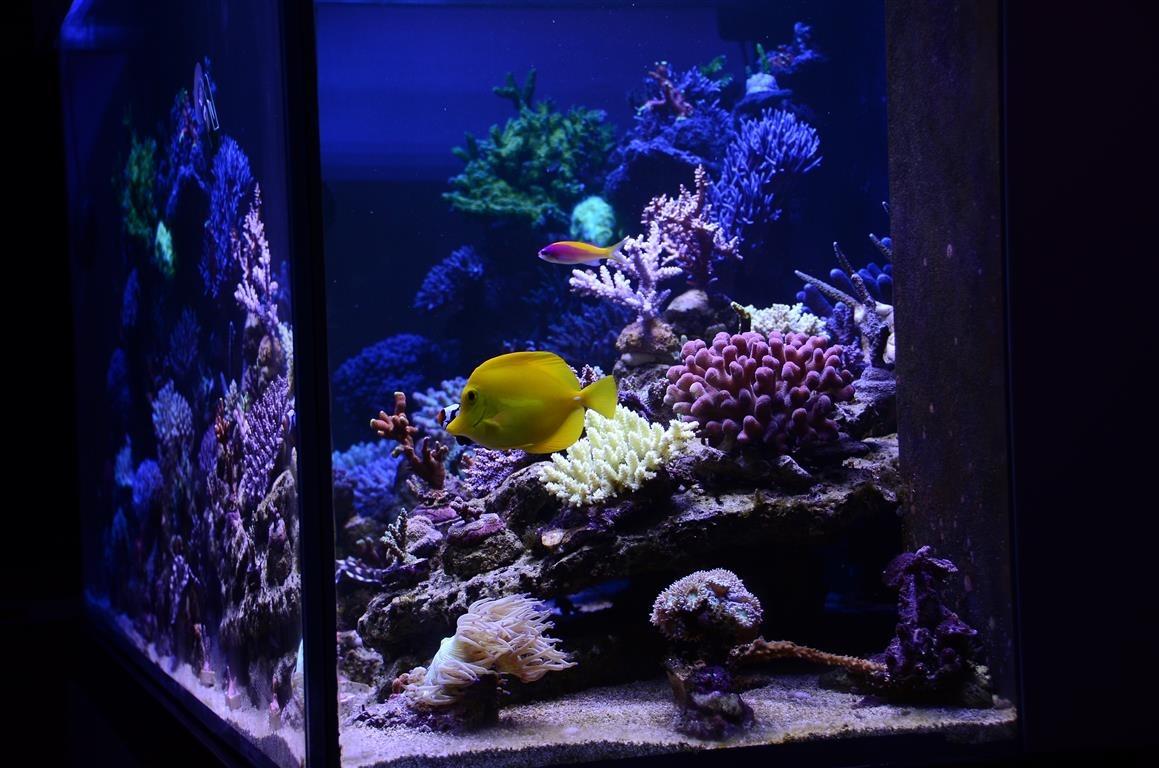 210 gallon tank unter atlantik v2 1b led aquarium led beleuchtung orphek. Black Bedroom Furniture Sets. Home Design Ideas