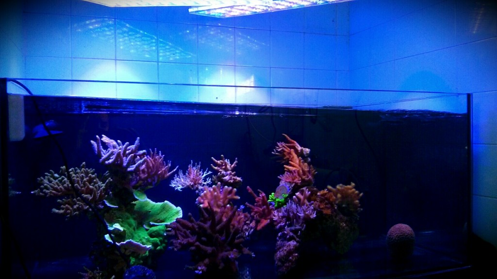 stable environment for our coral