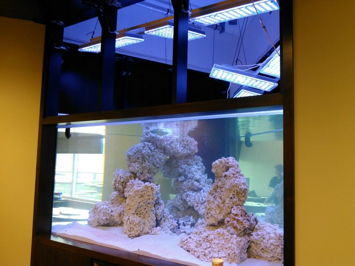 1500-gallon-reef-aquarium-éclairage LED