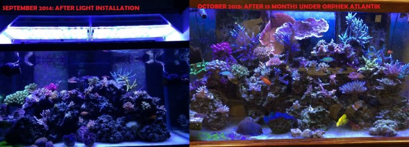 Fast coral growth under LED light