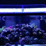 LED-aquarium-light-Atlantik