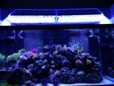 LED-aquarium-light-Atlantik