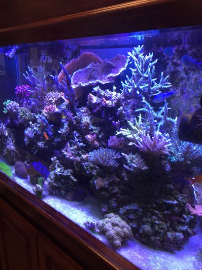 Stunning 120 Gallon Saltwater Coral Reef Reef Aquarium